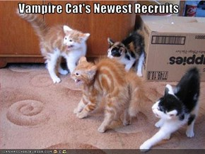 Vampire Cat's Newest Recruits