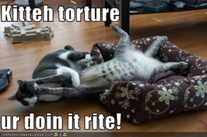 Kitteh torture  ur doin it rite!