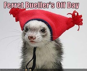 Ferret Bueller's Off Day
