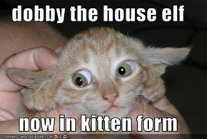 dobby the house elf  now in kitten form