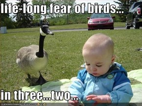 life-long fear of birds...  in three...two...