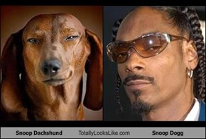 Snoop Dachshund Totally Looks Like Snoop Dogg