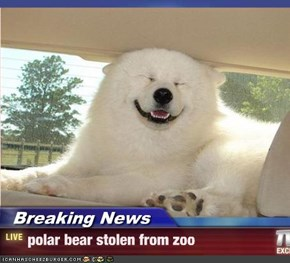 Breaking News - polar bear stolen from zoo