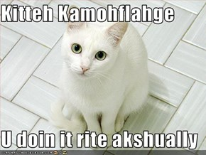 Kitteh Kamohflahge  U doin it rite akshually