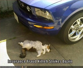 Insurance Fraud Kitteh Strikes Again