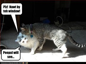 Plz!  Nawt by teh window!