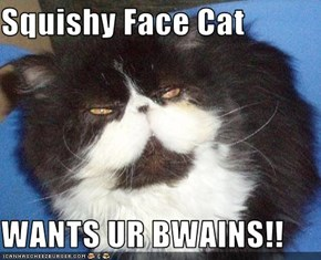 Squishy Face Cat  WANTS UR BWAINS!!