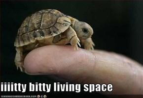 iiiitty bitty living space