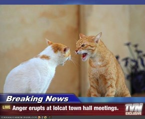 Breaking News - Anger erupts at lolcat town hall meetings.