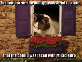 To their horror, the family discovered too late  that the catnip was laced with MiracleGro