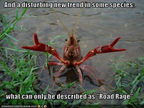 "And a disturbing new trend in some species:  what can only be described as ""Road Rage"""