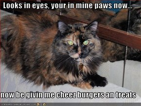 Looks in eyes, your in mine paws now...  now be givin me cheez burgers an treats