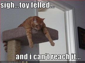 sigh...toy felled...  and i can't reach it...