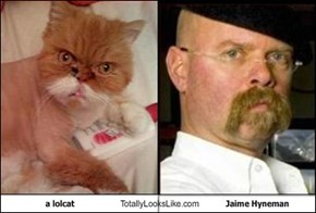 a lolcat Totally Looks Like Jaime Hyneman