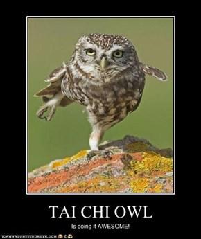 TAI CHI OWL