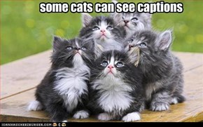 some cats can see captions