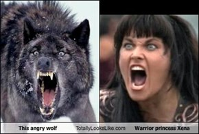 This angry wolf Totally Looks Like Warrior princess Xena