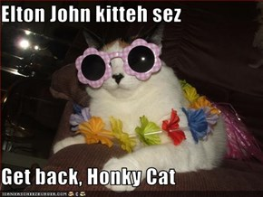 Elton John kitteh sez  Get back, Honky Cat