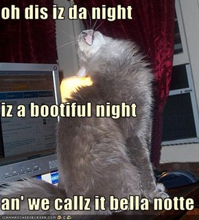 oh dis iz da night iz a bootiful night an' we callz it bella notte