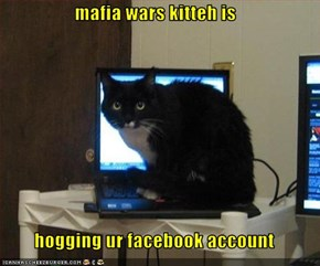 mafia wars kitteh is  hogging ur facebook account