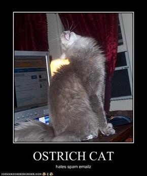 OSTRICH CAT