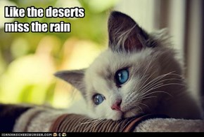 Like the deserts miss the rain
