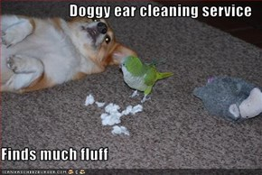 Doggy ear cleaning service  Finds much fluff