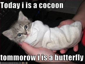 Today i is a cocoon  tommorow i is a butterfly