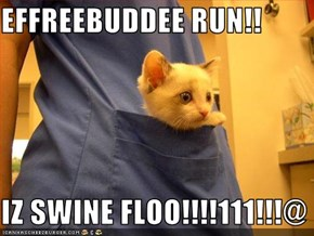 EFFREEBUDDEE RUN!!  IZ SWINE FLOO!!!!111!!!@