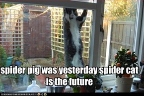 spider pig was yesterday spider cat is the future