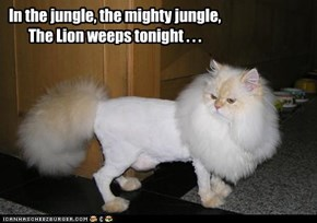 In the jungle, the mighty jungle, The Lion weeps tonight . . .