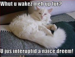 Whut u wakez meh up fur?  U jus interuptid a naice dreem!