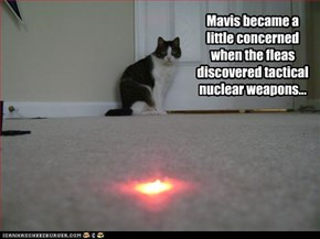 Mavis became a little concerned when the fleas discovered tactical nuclear weapons...