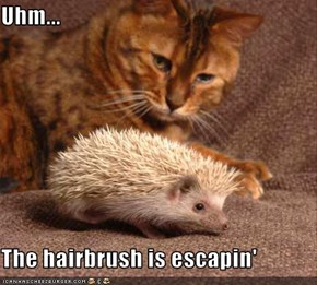 Uhm...  The hairbrush is escapin'