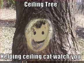 Ceiling Tree  Helping ceiling cat watch you