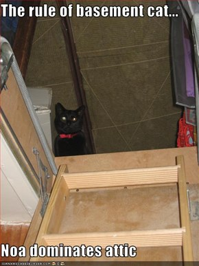 The rule of basement cat...  Noa dominates attic