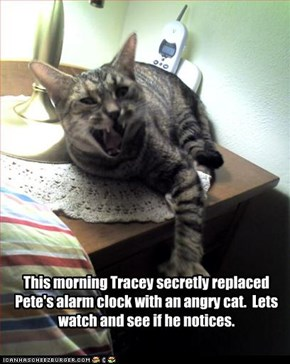 This morning Tracey secretly replaced Pete's alarm clock with an angry cat.  Lets watch and see if he notices.