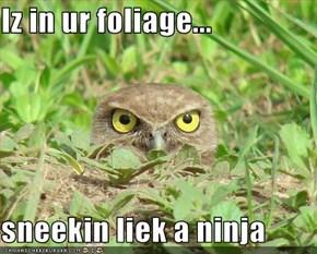 Iz in ur foliage...  sneekin liek a ninja