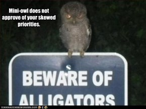 Mini-owl does not approve of your skewed priorities.