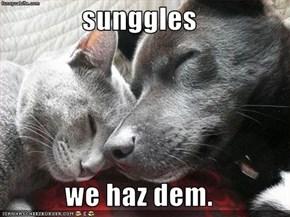 sunggles  we haz dem.