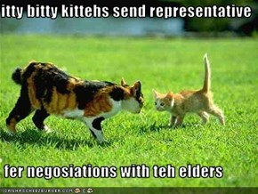 itty bitty kittehs send representative   fer negosiations with teh elders