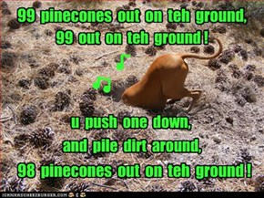 99  pinecones  out  on  teh  ground,