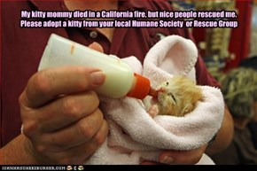My kitty mommy died in a California fire, but nice people rescued me. Please adopt a kitty from your local Humane Society  or Rescue Group