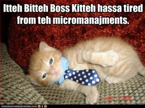 Itteh Bitteh Boss Kitteh hassa tired from teh micromanajments.