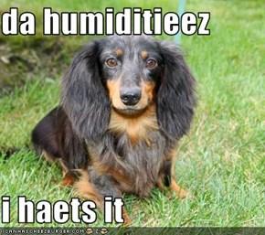 da humiditieez  i haets it