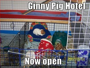 Ginny Pig Hotel  Now open