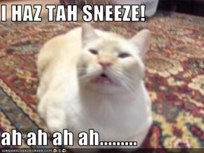I HAZ TAH SNEEZE!  ah ah ah ah.........