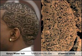 Kanye Wests' hair Totally Looks Like A termite colony