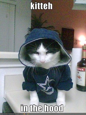 kitteh   in the hood