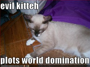 evil kitteh  plots world domination